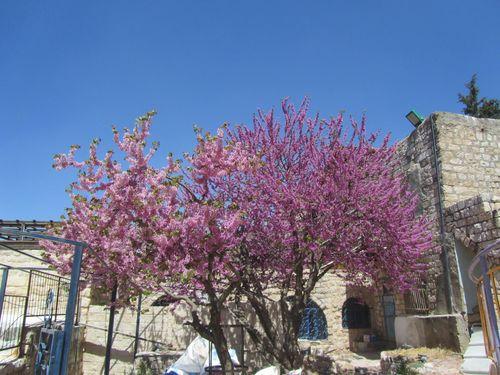 Safed3