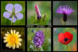 Wild flower collection - yehoshua halevy