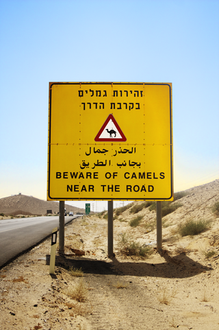 1_camels